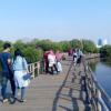 Alamat dan Harga Tiket Masuk Hutan Mangrove Jakarta