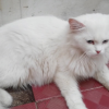 Ketahui Penyebab dan Cara Mengatasi Bulu Kucing yang Rontok Versi 7saudara.com