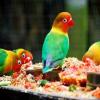 Pengen Lovebird Biar Gacor Terus, Ini Resep Makanannya – 7saudara.com