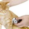 Cara Paling Mudah Mengenali Kucing Yang Sedang Sakit – 7saudara.com