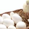 Inilah Cara Mengetahui Bentuk Telur Calon Anak Ayam Bangkok Jantan Super dan Betina Versi 7saudara.com