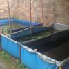Panduan Beternak Lele Menggunakan Terpal di Lokasi Rumah Yang Sempit – 7saudara.com